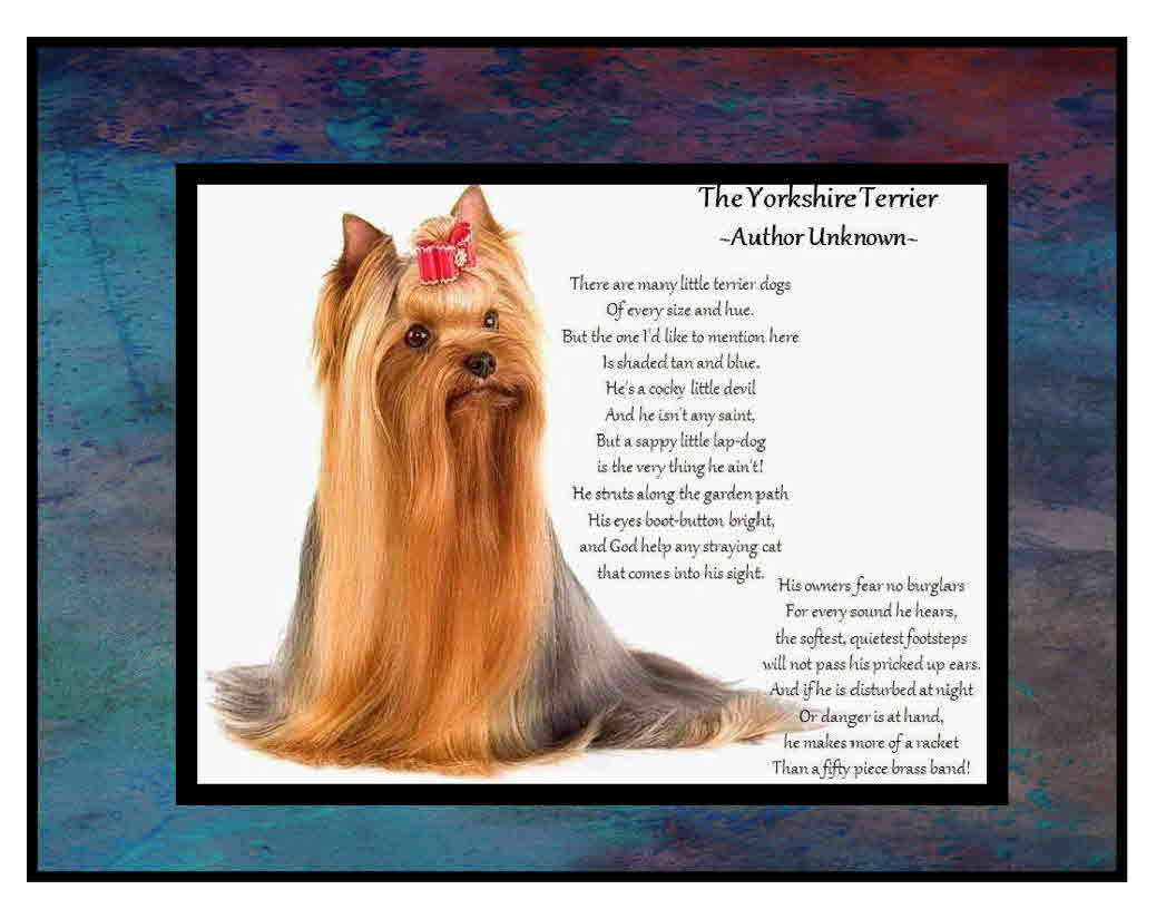Angels Yorkies & Designer puppies poems 45244 The Yorkshire Terrier