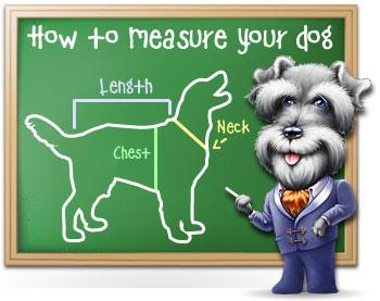 How to measure your dog picture